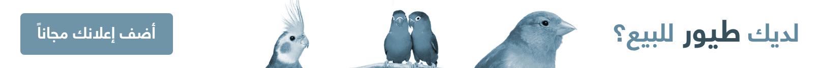 اضف اعلان بيع وشراء طيور الزينة